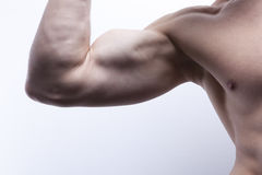 Sexy male's body (part) Stock Image
