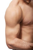 Sexy muscular man's hand. Stock Image