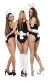 Sexy playgirls in konijntjeskostuum royalty-vrije stock afbeeldingen