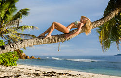 Sexy schöne Blondine legen auf Stamm der Palme Lizenzfreie Stockfotos