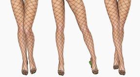 Sexy slim female legs in dark stockings. Royalty Free Stock Image