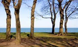 Sexy Tree Trunks. Tree trunks along Lake Michigan in Chicago, winter time Royalty Free Stock Photo