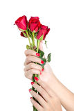 Sexy woman hand with red nails a bunch of roses. Royalty Free Stock Image