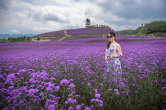Sexy woman in lavender theme park Stock Photo