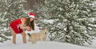 Sexy young Santa-girl. Dog and Sexy young Santa-girl in red with Christmas-tree decorations in pine forest Royalty Free Stock Photography