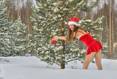Sexy young Santa-girl. In red with Christmas-tree decorations in pine forest Stock Image