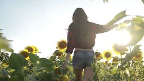 young woman running through sunflower field stock video