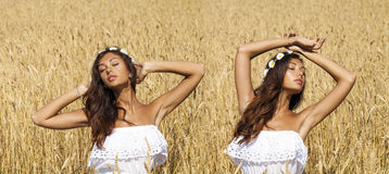Sexy young woman in white dress in a wheat golden field Stock Photography