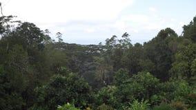 Seychelle wysp przyrody całkowity plan zdjęcie wideo