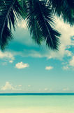 Seychellen-Palme Lizenzfreies Stockfoto
