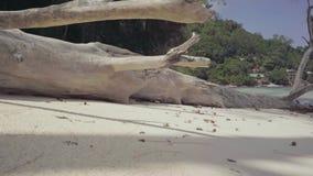 seychellen Praslin-Insel Getrockneter Baum, der auf dem Strand von einer Insel im Indischen Ozean liegt Tropeninselluxus stock video footage