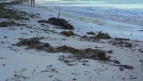 seychellen Praslin-Insel Tropeninselluxusferien Algen liegen auf dem Sand durch das Meer Tourismus, Ferien stock footage