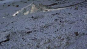 seychellen Praslin-Insel Wei?er Sand auf dem Strandabschlu? oben Kleine h?lzerne St?cke, die vom Baum fallen Sch?ner Tag stock video footage