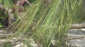seychellen Praslineiland Leuke jonge vrouwenzitting op de boomboomstam bij het water op het strand Reizend concept stock videobeelden