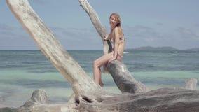 seychellen Praslineiland Leuke slanke aantrekkelijke jonge vrouw die in de camerazitting op de boomboomstam bekijken stock videobeelden