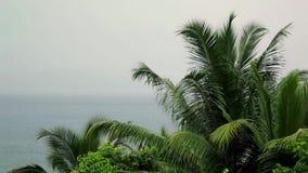 Seychellen, tropischer Regen am Äquator, Palmenniederlassungen im Regen und Wind stock video