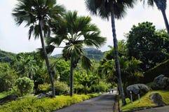 Seychellerna medborgarebotaniska trädgårdar Royaltyfri Bild