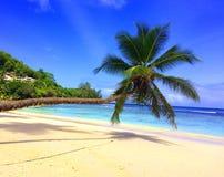 Seychellerna palmträd på stranden royaltyfri fotografi