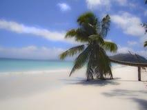 Seychelles. Praslin isle in Seychelles archipelago. Sandy beach with palm tree Royalty Free Stock Photos