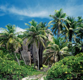Seychelles. Palm trees on deserted island, Seychelles royalty free stock photo