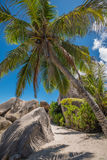 Seychelles coconut palm tree and granite boulder, La Digue Royalty Free Stock Photos