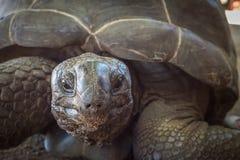 Seychelles giant tortoise Stock Photos