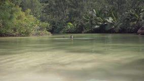 seychelles Ilha de Praslin A menina nada na água em uma ilha exótica no Oceano Índico Para?so na terra filme