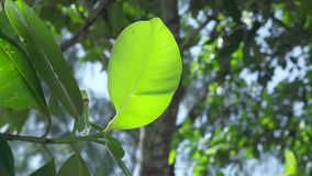 seychelles Ilha de Praslin O fim sae acima de uma árvore ou de um arbusto tropical que crescem em uma ilha exótica no Oceano Índi filme