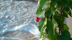 seychelles Ilha de Praslin Vista bonita do Sandy Beach, do oceano e de ondas de rolamento As árvores exóticas crescem ao longo do filme