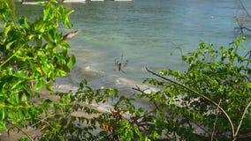 Seychelles Isla de Praslin Hermosa vista de la playa arenosa, del océano y de las ondas de balanceo Web de ara?a con la ara?a gra metrajes