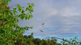Seychelles Isla de Praslin Hermosa vista de la playa arenosa, del océano y de las ondas de balanceo Web de ara?a con la ara?a gra almacen de video