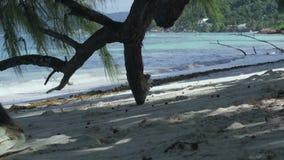 Seychelles Isla de Praslin Rama de ?rbol tropical en el primero plano Paisaje marino hermoso Vacaciones de lujo de la isla tropic almacen de video
