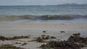 seychelles Isola di Praslin Vacanza di lusso dell'isola tropicale Le alghe si trovano sulla sabbia dal mare Turismo, vacanza video d archivio