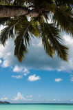Seychelles Palm Royalty Free Stock Images