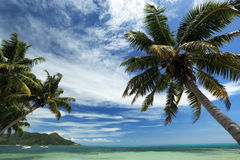 Seychelles. Palm trees and ocean. Stock Photo