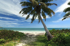 Seychelles. Palm trees and ocean. Royalty Free Stock Photos