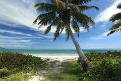 Seychelles. Palmeiras e oceano. fotos de stock royalty free