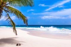 Seychelles, Paradise beach. La Digue at Anse Lazio, Source d'A. Rgent Stock Photography