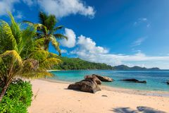 Tropical beach with palm and turquoise sea. Seychelles Paradise beach. Sunny beach with palm and turquoise sea. Summer vacation and tropical beach concept royalty free stock image