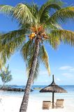 Seychelles Paradise lost. Sun loungers for Two beside a swaying Palm Tree with Co co nuts and gentle lapping Waves on The Shores of The Seychelles Royalty Free Stock Photos