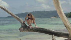 seychelles Praslin ? Den slanka attraktiva unga kvinnan som därefter sitter på trädstammen på vattnet på stranden arkivfilmer