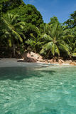 Seychelles. Praslin island. Seychelles seascape. Anse Lacio. Palms over water Royalty Free Stock Photos
