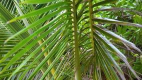 Seychelles Praslin wyspa Zako?czenie palmowi li?cie Turystyka, relaksuje, być na wakacjach, podróżuje pojęcie, zdjęcie wideo