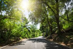 Seychelles. The road to palm jungle. Stock Photo