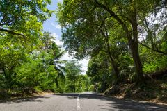 Seychelles. The road to palm jungle. Stock Photography