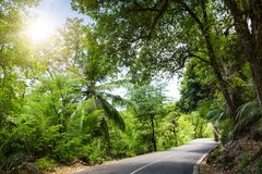 Seychelles. The road to palm jungle. Royalty Free Stock Image
