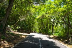 Seychelles. The road to palm jungle. Stock Photos