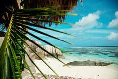 seychelles Svarta stenar, berg Tropikerna och palmträd fotografering för bildbyråer