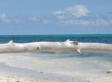 Seychelles wood and sea Royalty Free Stock Images