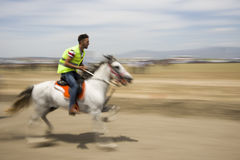 Seyrek Rahvan konia rywalizacja obraz royalty free